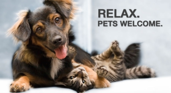 pet_friendly_montenegro