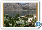 Montenegro_Villa_03848